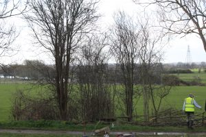 Borrowash Bottom Lock Hedge - Before - April 2015