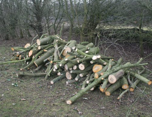 Fresh Logs available at Spondon canal line